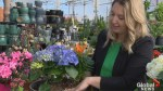 Gardening Tips: spring colours in homes