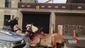 Anti-calèche movement after horse falls