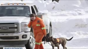 Rescue dogs help look for missing man Ryan Shtuka