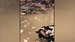 Harvey floodwaters fill evacuation shelter in southeast Texas