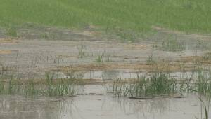 BC Floods: Chilliwack bracing as rivers rise