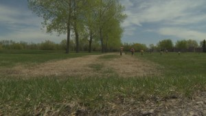 Winnipeg man shocked after mother's grave driven on by grounds crew