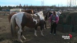 Fort McMurray resident recalls fleeing wildfire with daughters on horseback
