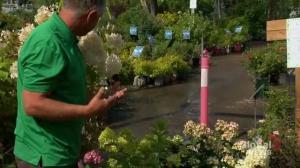 Gardening Tips: summer planting