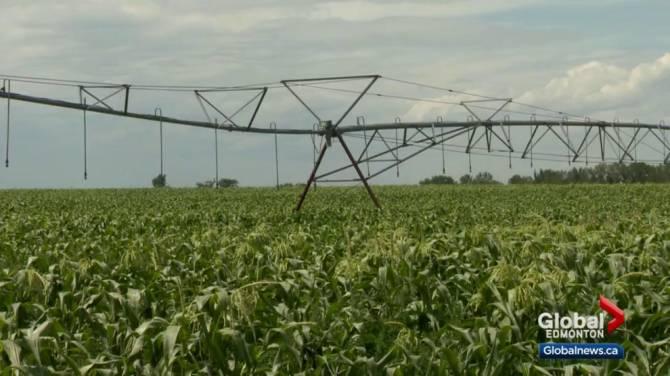 Prolonged rain expected to put a halt to harvest across the Prairies