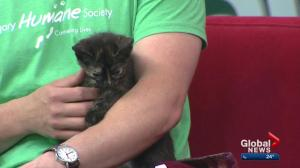Calgary Humane Society Pet of the Week: Saskatoon Berry