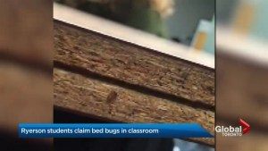 Ryerson University students uncover bed bugs in classroom