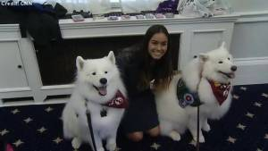 Therapy dogs brought to Capitol Hill to ease workers' election stress