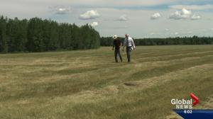 Alberta farmers facing more than just dry conditions