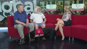 Calgary event highlights importance of guide dogs
