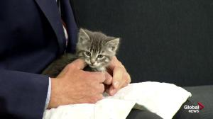 Edmonton Humane Society: Kittens galore with Ron, Rana, and Spi