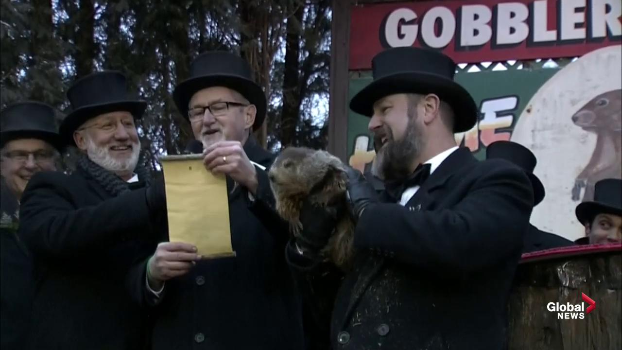 Someone call Bill Murray: Canada's famed groundhogs don't agree on winter's length