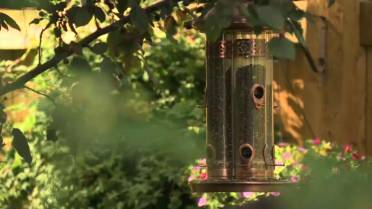 How to prevent birds from flying into your windows