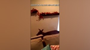 Houston police help to remove deer from home