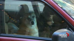 Dogs left in car during Toronto's extreme cold alert (01:55)