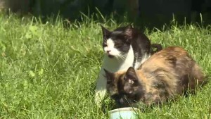 Council to approve feral cat program this week