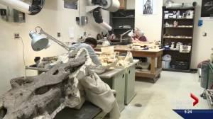 Scottish boy, 12, completes University of Alberta's Dino 101 course