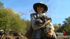Dogs trapped by California mudslides reunited with owners
