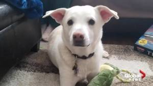 Illinois couple shocked after their dog is accidentally euthanized