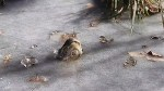 Zoo shows off amazing way alligators survive in freezing temperatures
