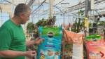 Gardening Tips: yard and garden preparation