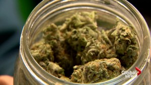 New Brunswickers spent over $8 million on pot in just four months