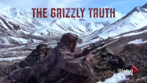 'The Grizzly Truth' documentary looks at controversial bear hunt in B.C.
