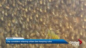 Vernon council creating buzz by considering changing hive bylaws