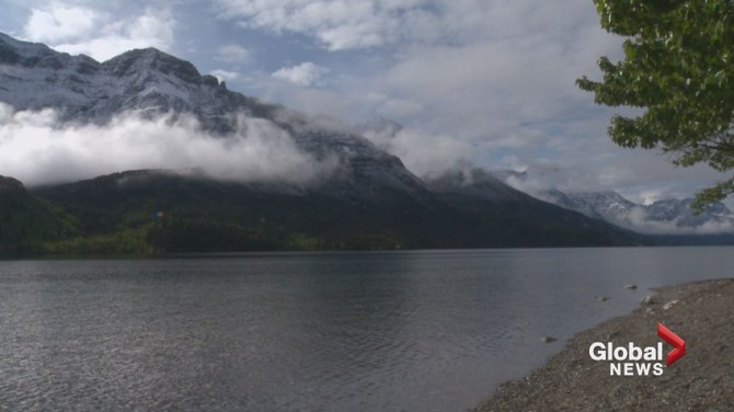 Man attacked by grizzly bear near Waterton Lakes National Park