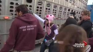 Case dismissed against Toronto activist who gave water to pigs headed to slaughter