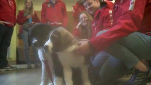 St. Bernard-cross puppies rescued off B.C. cliff get forever homes