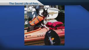 Global BC viewers share the secret life of their pets