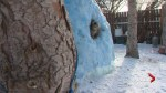 Calgary cat enjoys exploring backyard igloo