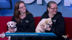 Adopt a Pal: Winnipeg Giant Breed Rescue