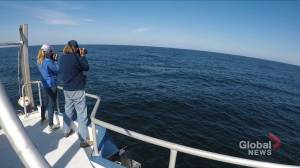 Scientists return from studying North Atlantic right whales (02:21)