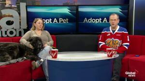 Adopt A Pet: Saturday, Jan. 19, 2019