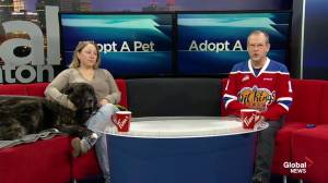 Adopt A Pet: Saturday, Jan. 19, 2019