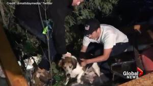 'Charlie' the beagle pulled from rubble after tornado touches down in Ottawa neighbourhood