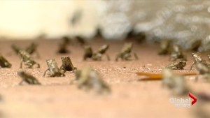 Thousands of poisonous toads swarming south Florida community