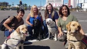 BC trauma dog goes to Las Vegas