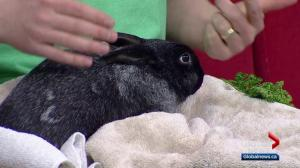 Calgary Humane Society Pet of the Week: Captain Louis Hare