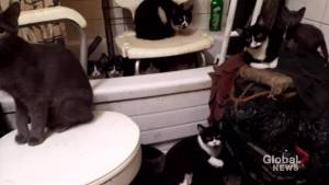 Toronto rescue group saves 300 cats from apartment (01:47)