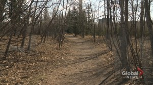 Calgary woman disappointed by removal of caragana bushes in Edworthy Park