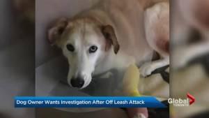 Owner of alleged attack dog flees