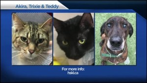 Shelter Pet Project – Teddy, Akria, Trixie