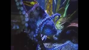 Inky the octopus escapes aquarium in New Zealand