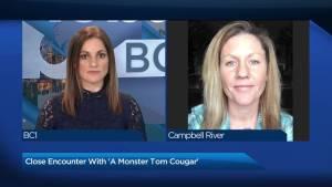 B.C. man captures cougar encounter on video
