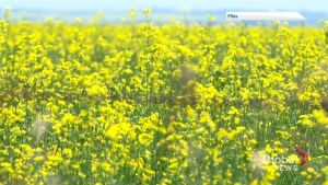 Canola exporting concerns leading topic at SARM convention