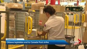 Postal workers return to work but still upset over back-to-work legislation