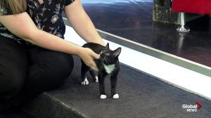 SCARS introduces us to cute cats in need of a forever home